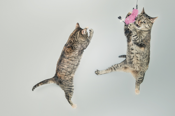 猫が2匹ジャンプ
