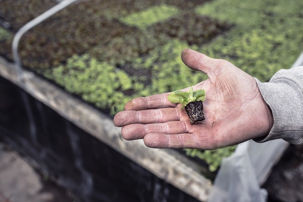 手の上に小さな植木
