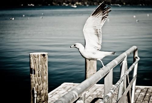海鳥が飛ぶところ