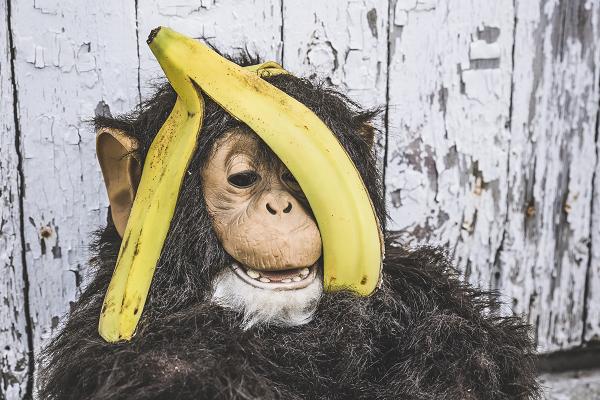 サルの頭にバナナの皮