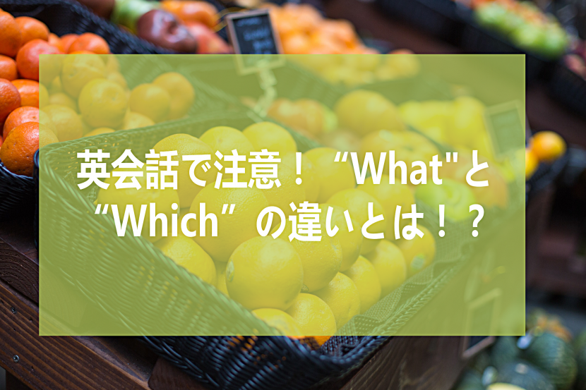 """英会話で注意!""""what""""と""""Which""""の違いとは!?"""